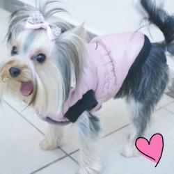 Šilta žieminė, rožinės spalvos striukė, šuniukui